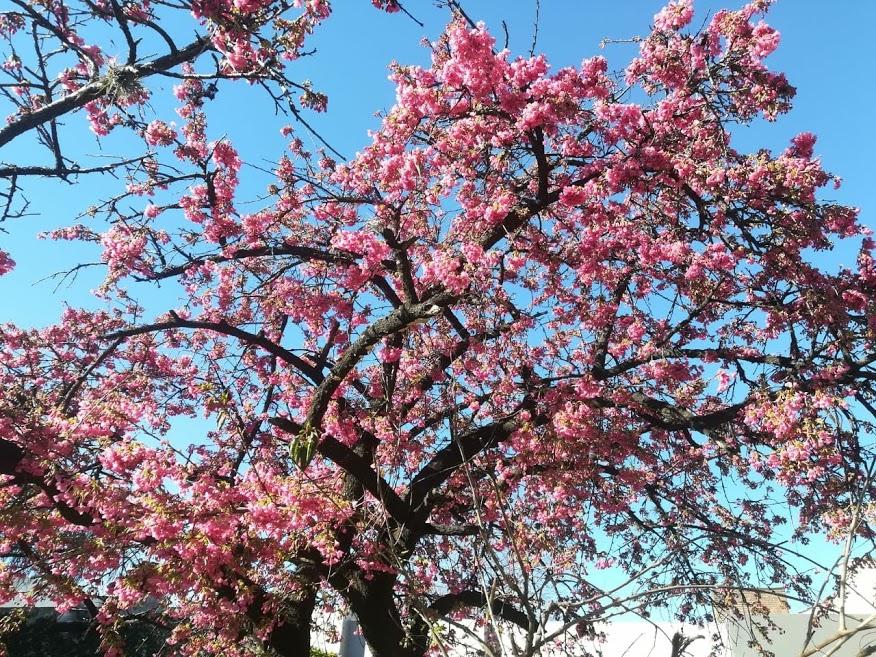 Día del Estudiante y Día de la Primavera